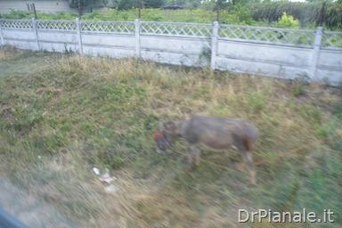 2012_0709_Costanza_0901