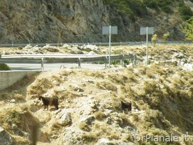 2012_0905_Argostoli_0472
