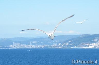 2013_0723_Vigo_1141